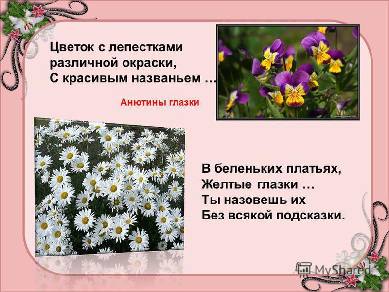 Цветок с лепестками различной окраски, С красивым названьем … Анютины глазки В беленьких платьях, Желтые глазки … Ты назовешь их Без всякой подсказки.