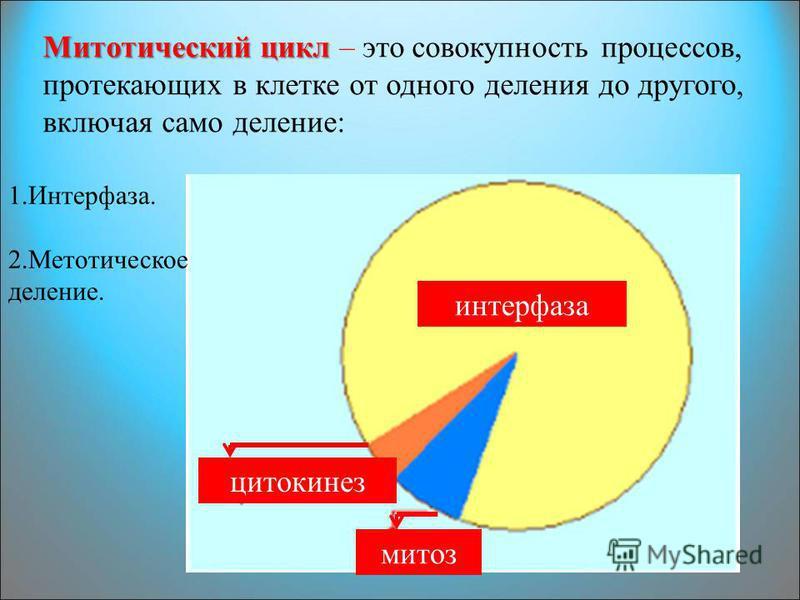 Митотический цикл Митотический цикл – это совокупность процессов, протекающих в клетке от одного деления до другого, включая само деление: интерфаза митоз цитокинез 1.Интерфаза. 2. Метотическое деление.