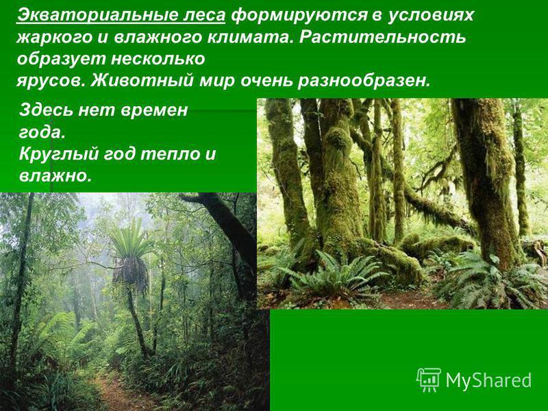 Экваториальные леса формируются в условиях жаркого и влажного климата. Растительность образует несколько ярусов. Животный мир очень разнообразен. Здесь нет времен года. Круглый год тепло и влажно.