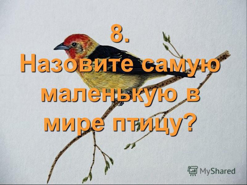 8. Назовите самую маленькую в мире птицу?