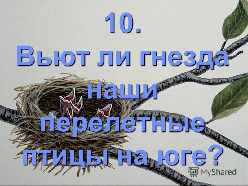 10. Вьют ли гнезда наши перелетные птицы на юге?