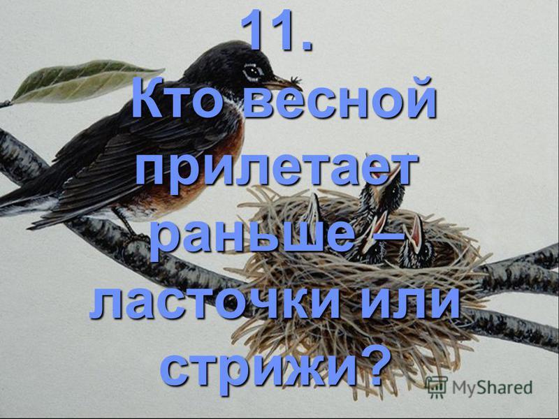 11. Кто весной прилетает раньше – ласточки или стрижи?