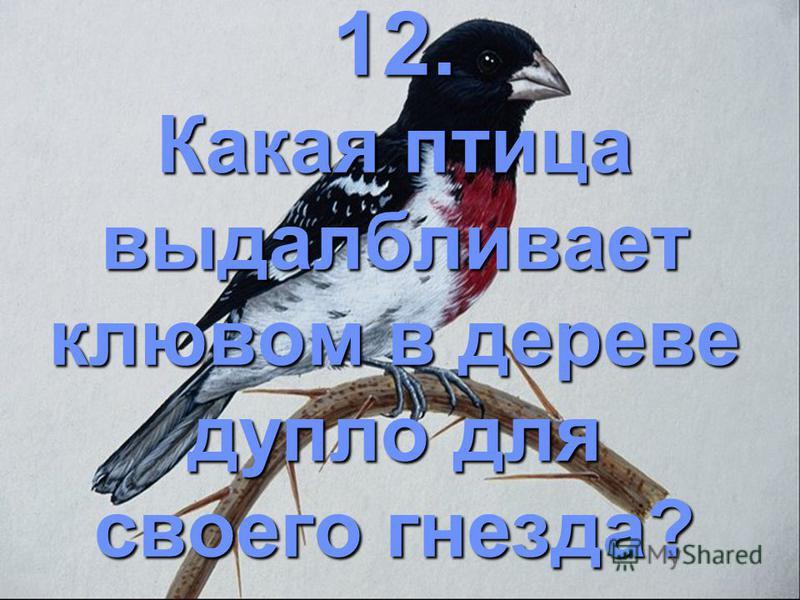 12. Какая птица выдалбливает клювом в дереве дупло для своего гнезда?