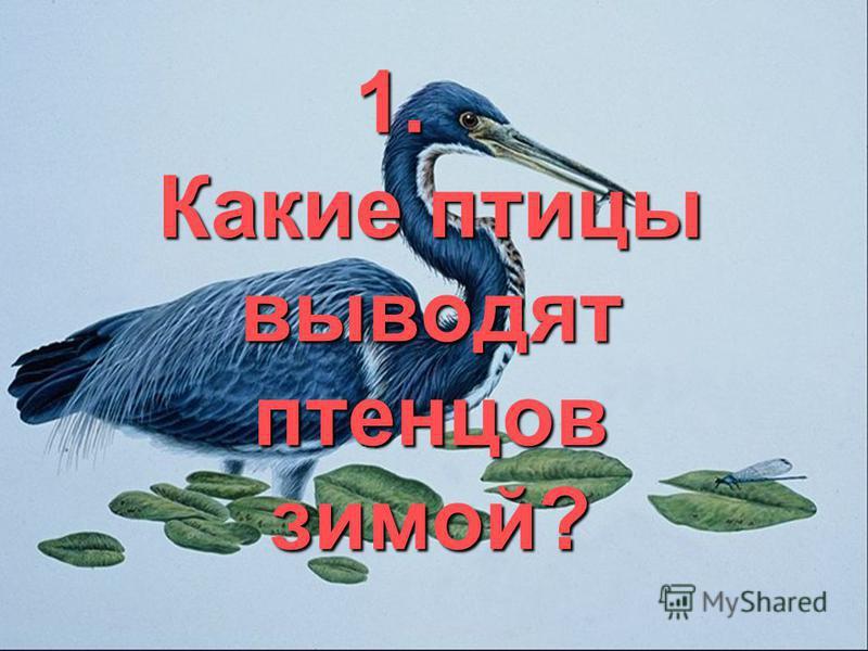 1. Какие птицы выводят птенцов зимой?