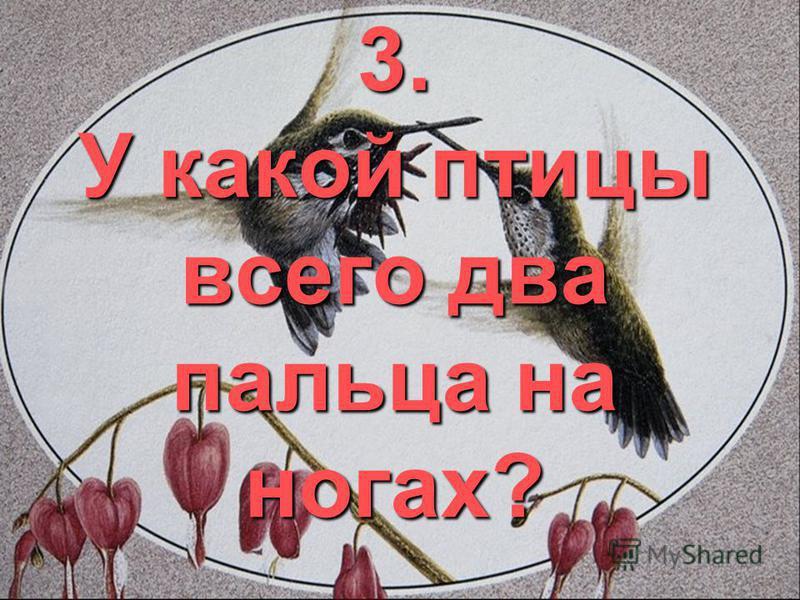 3. У какой птицы всего два пальца на ногах?