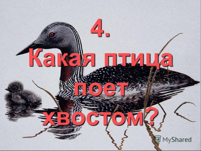 4. Какая птица поет хвостом?