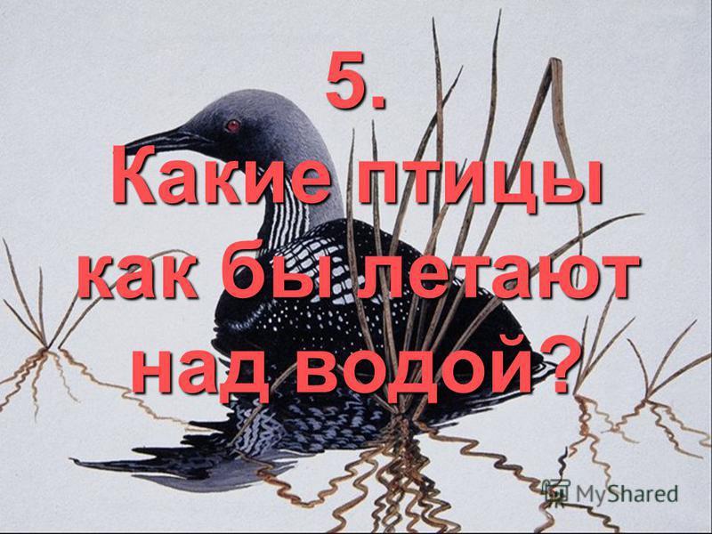 5. Какие птицы как бы летают над водой?