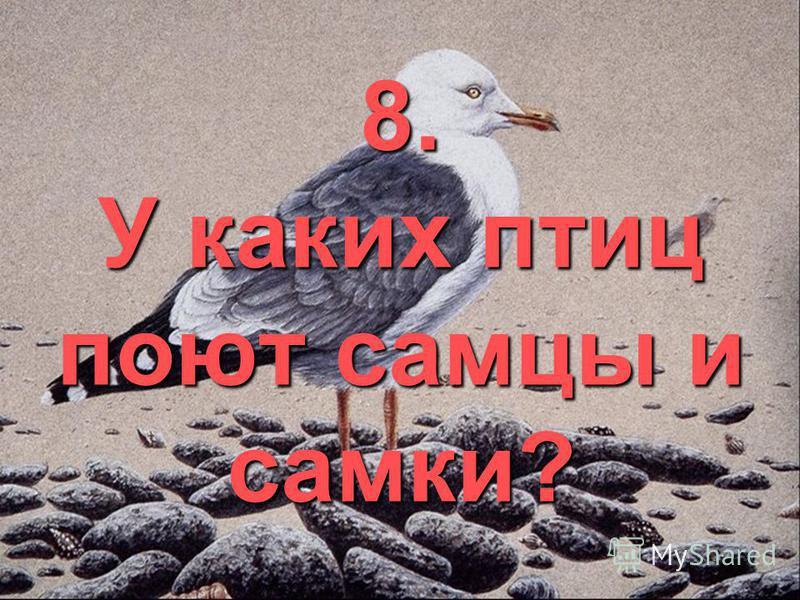 8. У каких птиц поют самцы и самки?