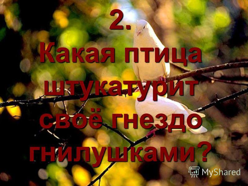 2. Какая птица штукатурит своё гнездо гнилушками?