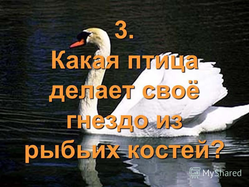 3. Какая птица делает своё гнездо из рыбьих костей?