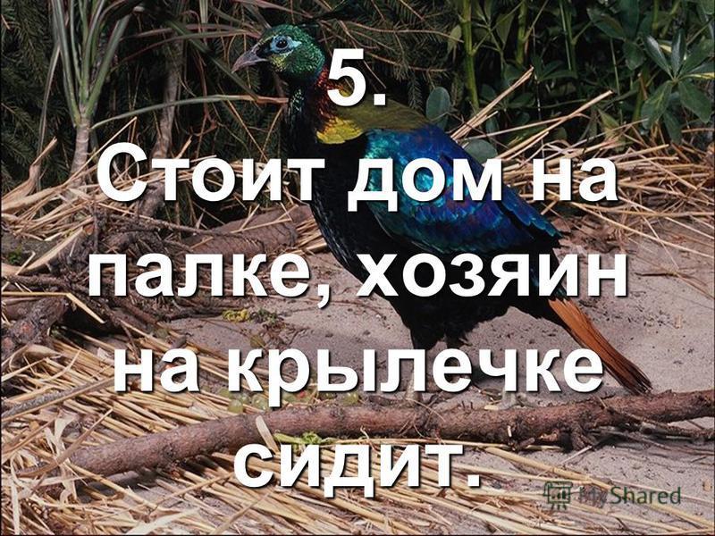 5. Стоит дом на палке, хозяин на крылечке сидит.