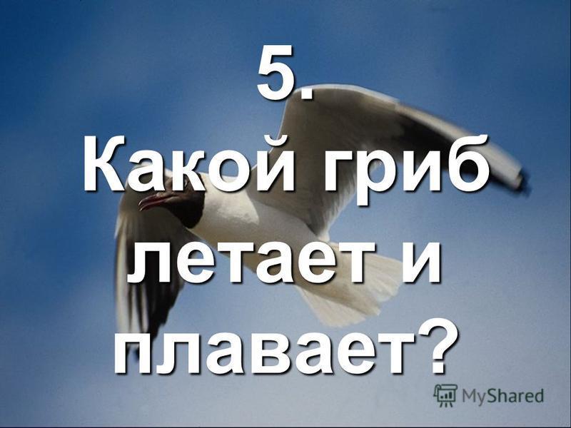 5. Какой гриб летает и плавает?