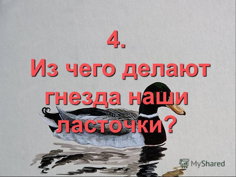 4. Из чего делают гнезда наши ласточки?