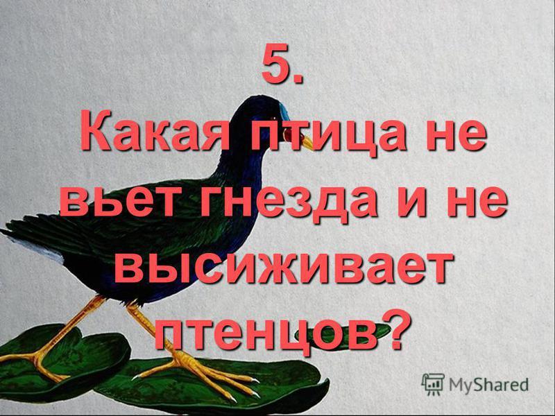 5. Какая птица не вьет гнезда и не высиживает птенцов?