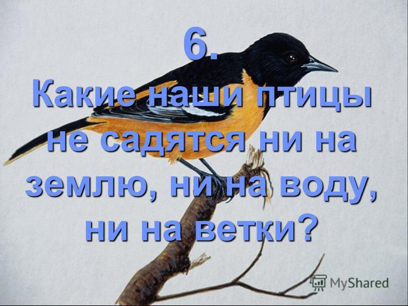 6. Какие наши птицы не садятся ни на землю, ни на воду, ни на ветки?