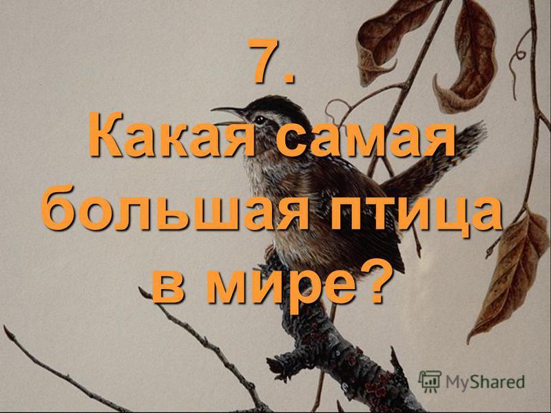7. Какая самая большая птица в мире?