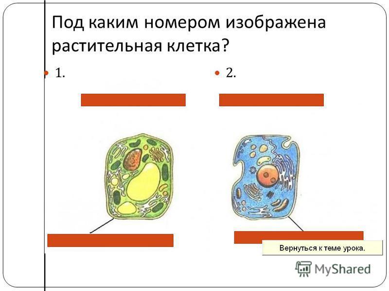Под каким номером изображена растительная клетка ? 1. 2.