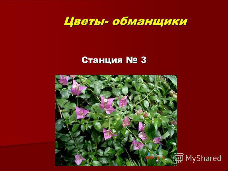 Цветы- обманщики Станция 3