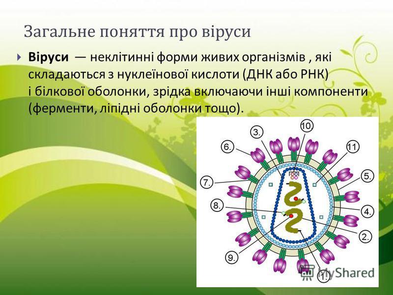 Загальне поняття про віруси Віруси неклітинні форми живих організмів, які складаються з нуклеїнової кислоти ( ДНК або РНК ) і білкової оболонки, зрідка включаючи інші компоненти ( ферменти, ліпідні оболонки тощо ).
