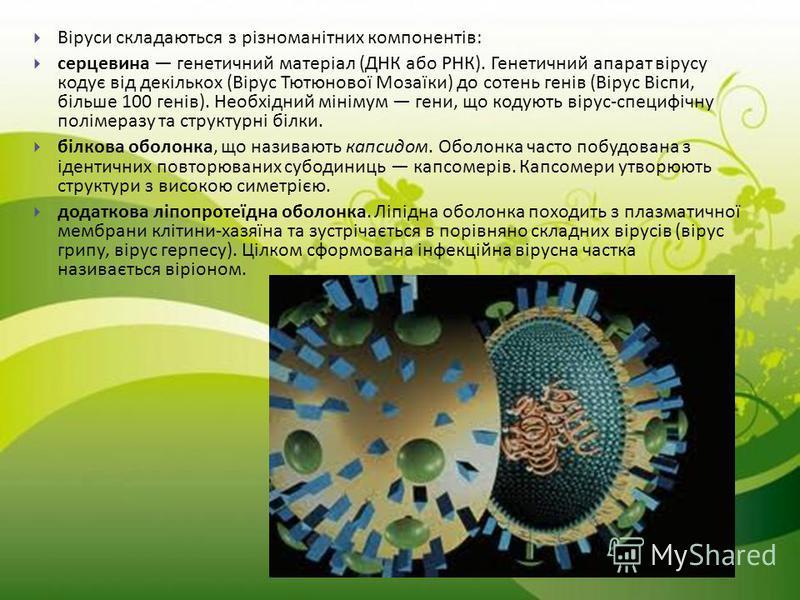 Віруси складаються з різноманітних компонентів : серцевина генетичний матеріал ( ДНК або РНК ). Генетичний апарат вірусу кодує від декількох ( Вірус Тютюнової Мозаїки ) до сотень генів ( Вірус Віспи, більше 100 генів ). Необхідний мінімум гени, що ко