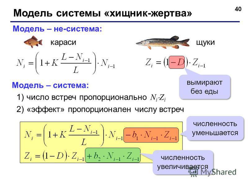 40 Модель системы «хищник-жертва» Модель – не-система: караси щуки вымирают без еды Модель – система: 1)число встреч пропорционально N i Z i 2)«эффект» пропорционален числу встреч численность уменьшается численность увеличивается
