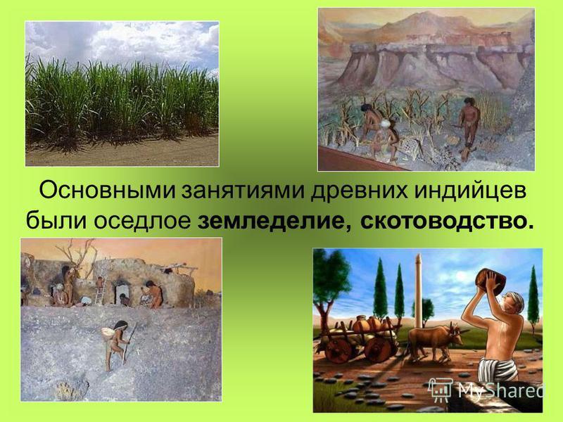 Основными занятиями древних индийцев были оседлое земледелие, скотоводство.