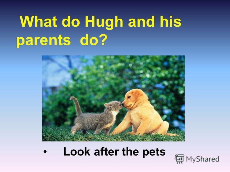 What do Hugh and his parents do? Look after the pets