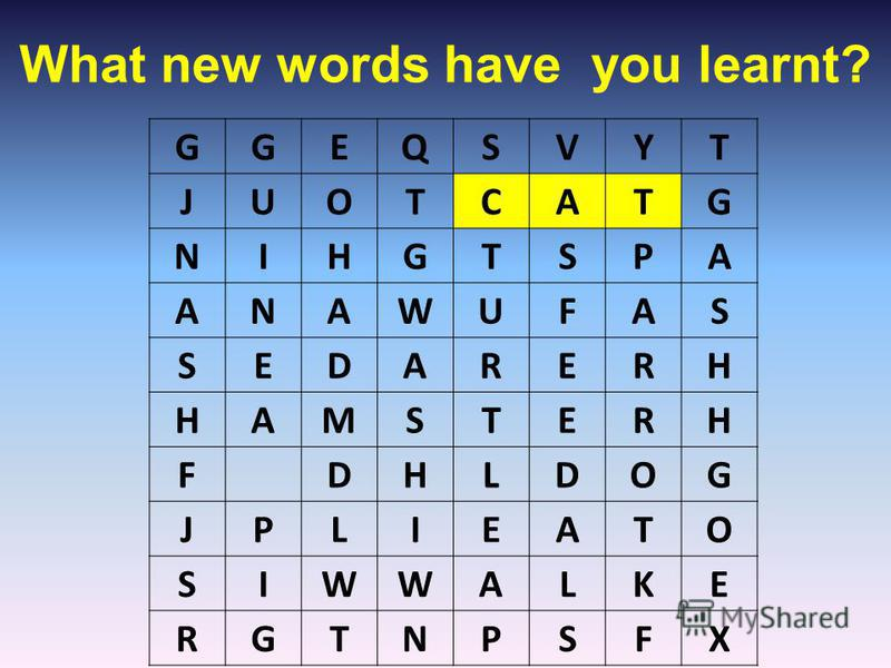 What new words have you learnt? GGEQSVYT JUOTCATG NIHGTSPA ANAWUFAS SEDARERH HAMSTERH FDHLDOG JPLIEATO SIWWALKE RGTNPSFX