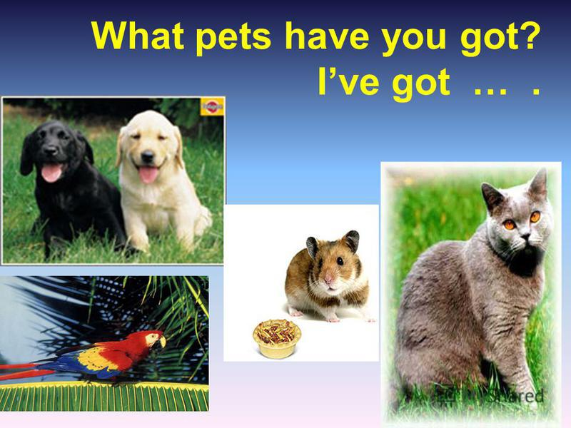 What pets have you got? Ive got ….