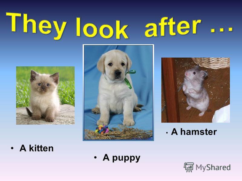 A hamster A kitten A puppy