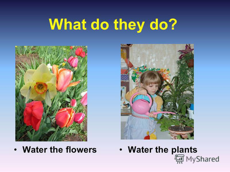 What do they do? Water the flowersWater the plants