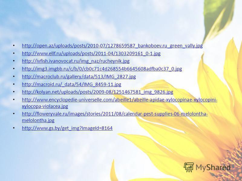 http://open.az/uploads/posts/2010-07/1278659587_bankoboev.ru_green_vally.jpg http://www.ellf.ru/uploads/posts/2011-04/1303209161_0-1. jpg http://ivfish.ivanovocat.ru/img_naz/rucheynik.jpg http://img3.imgbb.ru/c/b/0/cb0c71c4d268554b6645608adfba0c37_0.