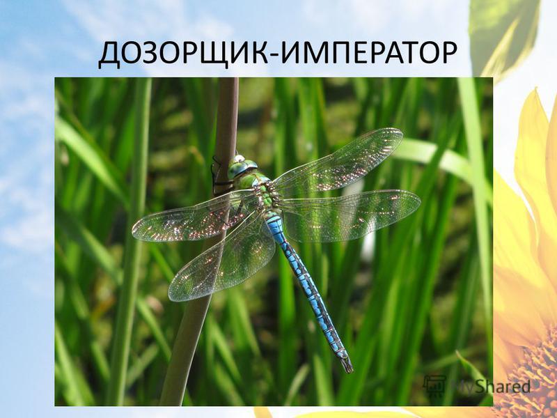 ДОЗОРЩИК-ИМПЕРАТОР