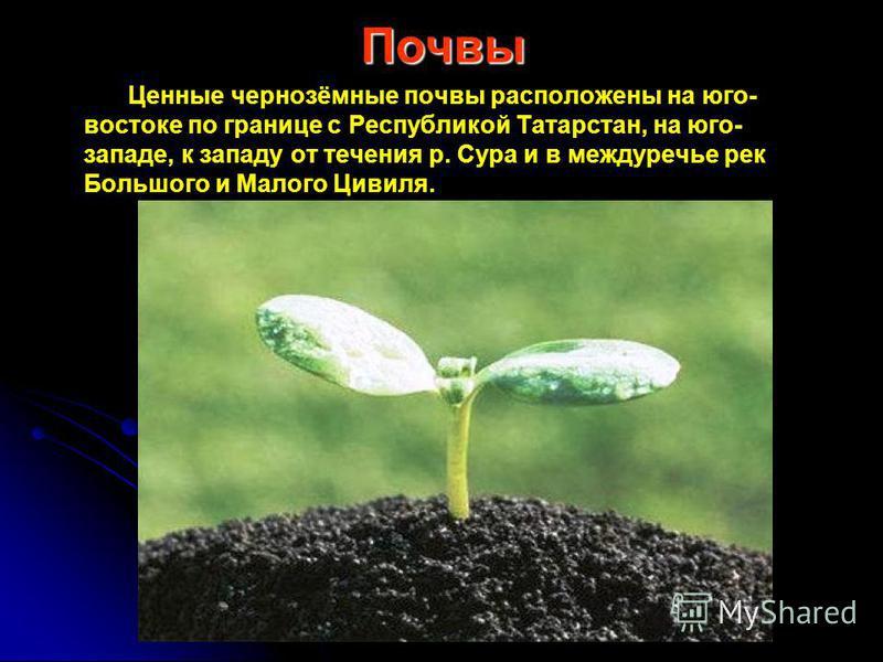 Почвы Ценные чернозёмные почвы расположены на юго- востоке по границе с Республикой Татарстан, на юго- западе, к западу от течения р. Сура и в междуречье рек Большого и Малого Цивиля.