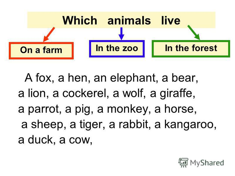 Which animals live On a farm In the zooIn the forest A fox, a hen, an elephant, a bear, a lion, a cockerel, a wolf, a giraffe, a parrot, a pig, a monkey, a horse, a sheep, a tiger, a rabbit, a kangaroo, a duck, a cow,