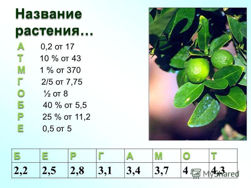 Название растения… А А 0,2 от 17 Т Т 10 % от 43 М М 1 % от 370 Г Г 2/5 от 7,75 О О ½ от 8 Б Б 40 % от 5,5 Р Р 25 % от 11,2 Е Е 0,5 от 5БЕРГАМОТ 2,22,52,83,13,43,744,3