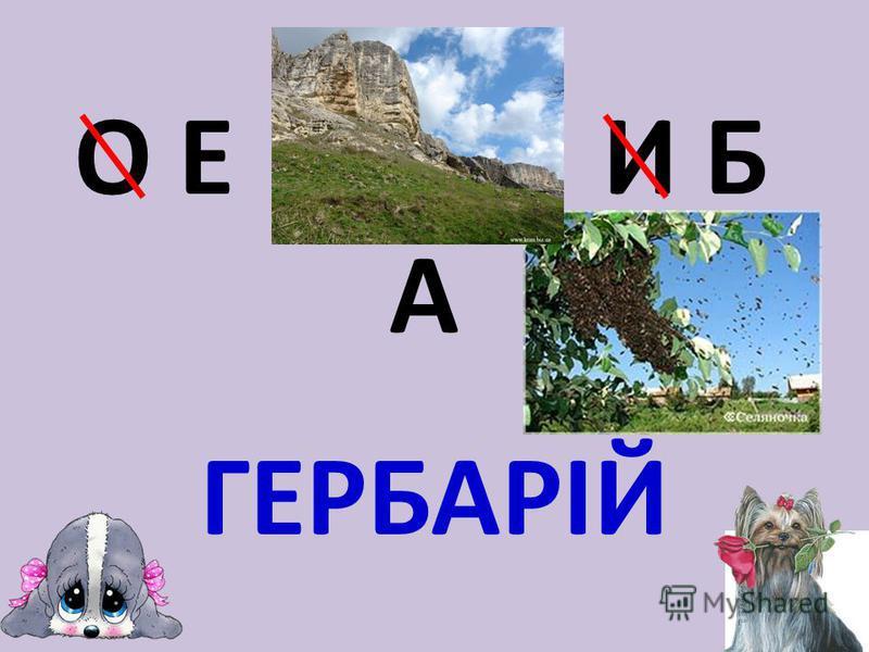 О Е И Б А ГЕРБАРІЙ