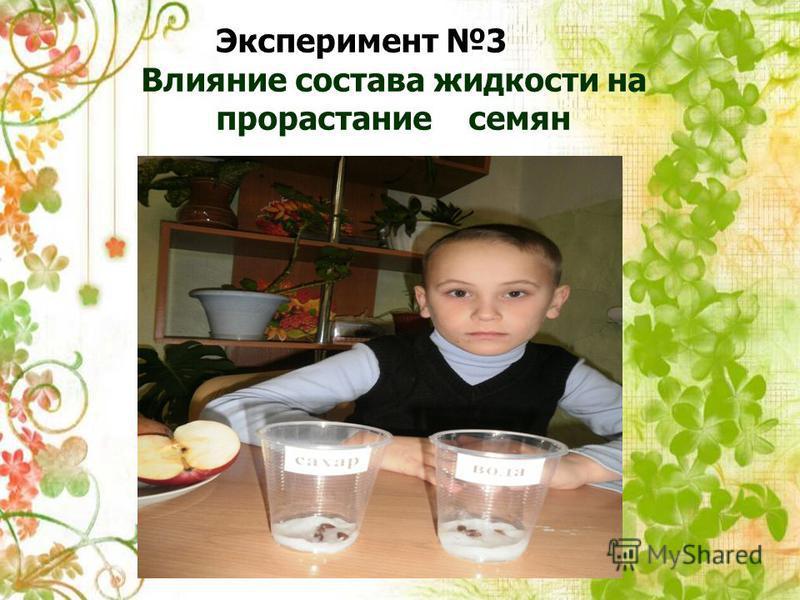 Эксперимент 3 Влияние состава жидкости на прорастание семян