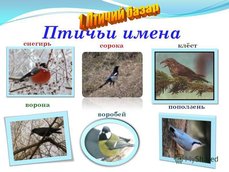 « Рыбе – вода, птице – воздух, зверю – лес, степь, горы. А человеку нужна Родина. И охранять Природу – значит охранять Родину!» 1 2 3 4 5 6