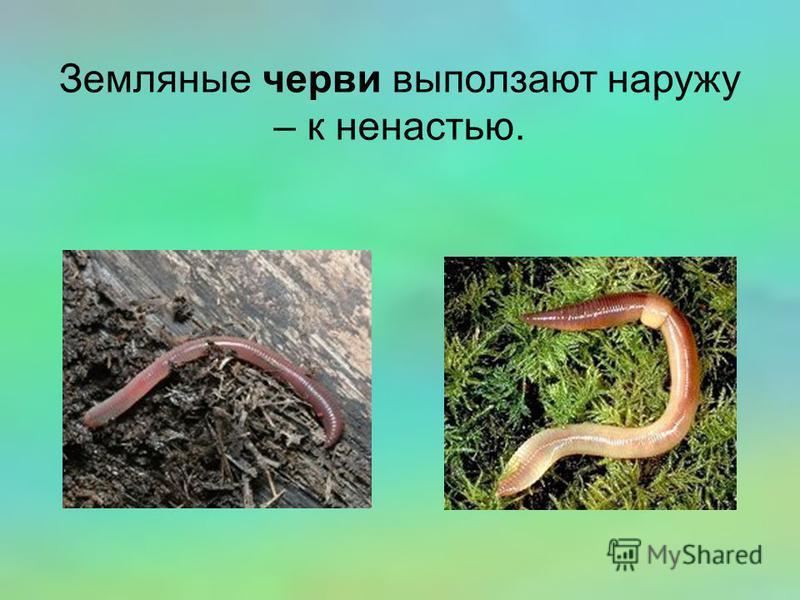 Земляные черви выползают наружу – к ненастью.