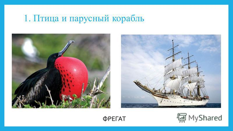 1. Птица и парусный корабль ФРЕГАТ