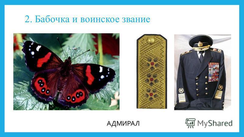 2. Бабочка и воинское звание АДМИРАЛ