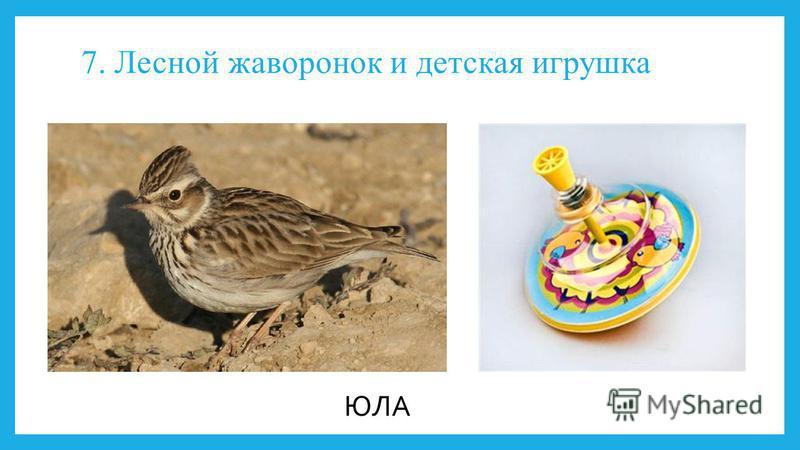 7. Лесной жаворонок и детская игрушка ЮЛА