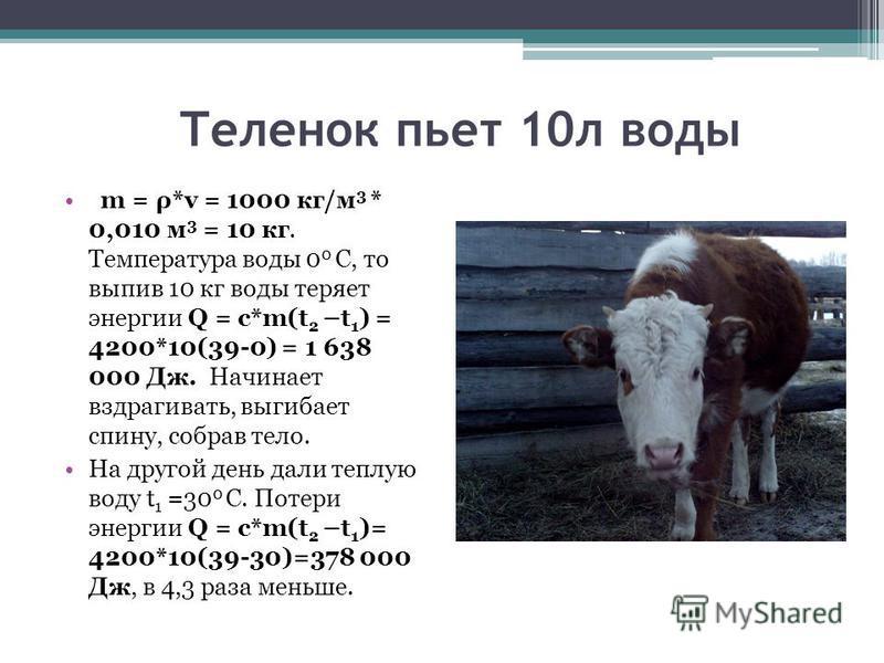 Теленок пьет 10 л воды m = ρ*v = 1000 кг/м 3 * 0,010 м 3 = 10 кг. Температура воды 0 0 С, то выпив 10 кг воды теряет энергии Q = с*m(t 2 –t 1 ) = 4200*10(39-0) = 1 638 000 Дж. Начинает вздрагивать, выгибает спину, собрав тело. На другой день дали теп