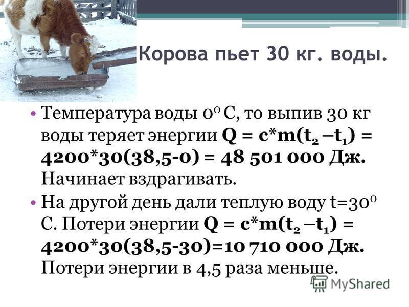 Корова пьет 30 кг. воды. Температура воды 0 0 С, то выпив 30 кг воды теряет энергии Q = с*m(t 2 –t 1 ) = 4200*30(38,5-0) = 48 501 000 Дж. Начинает вздрагивать. На другой день дали теплую воду t=30 0 С. Потери энергии Q = с*m(t 2 –t 1 ) = 4200*30(38,5