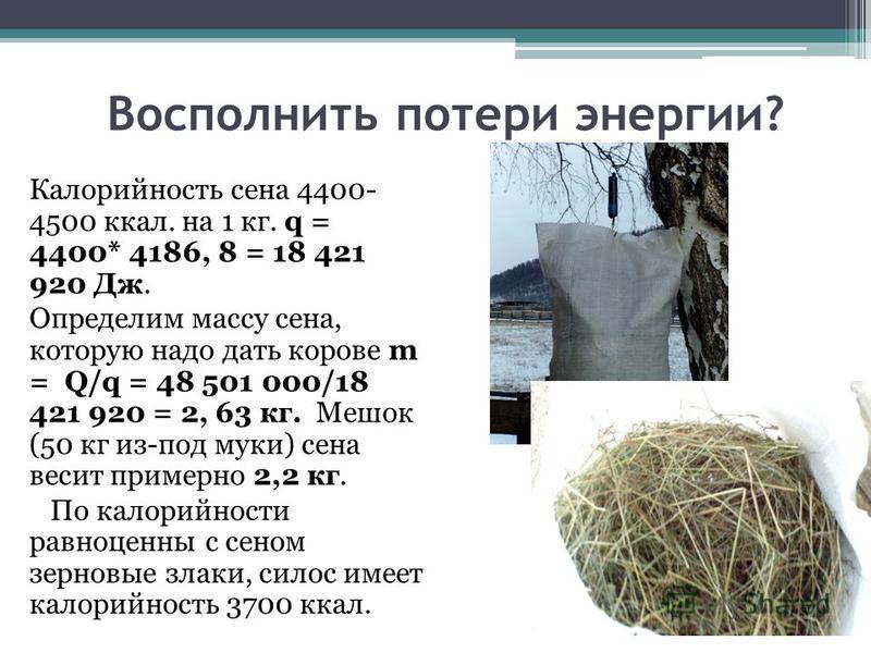 Восполнить потери энергии? Калорийность сена 4400- 4500 ккал. на 1 кг. q = 4400* 4186, 8 = 18 421 920 Дж. Определим массу сена, которую надо дать корове m = Q/q = 48 501 000/18 421 920 = 2, 63 кг. Мешок (50 кг из-под муки) сена весит примерно 2,2 кг.