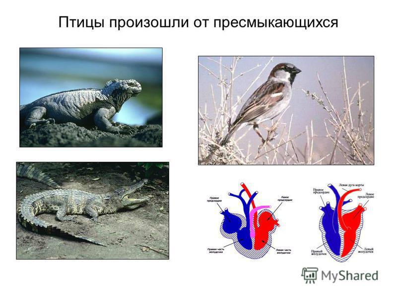 Птицы произошли от пресмыкающихся