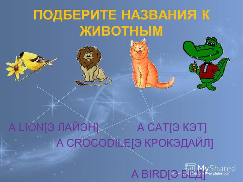 ПОДБЕРИТЕ НАЗВАНИЯ К ЖИВОТНЫМ A LION[Э ЛАЙЭН] A CAT[Э КЭТ] А CROCODILE[Э КРОКЭДАЙЛ] A BIRD[Э БЁД]