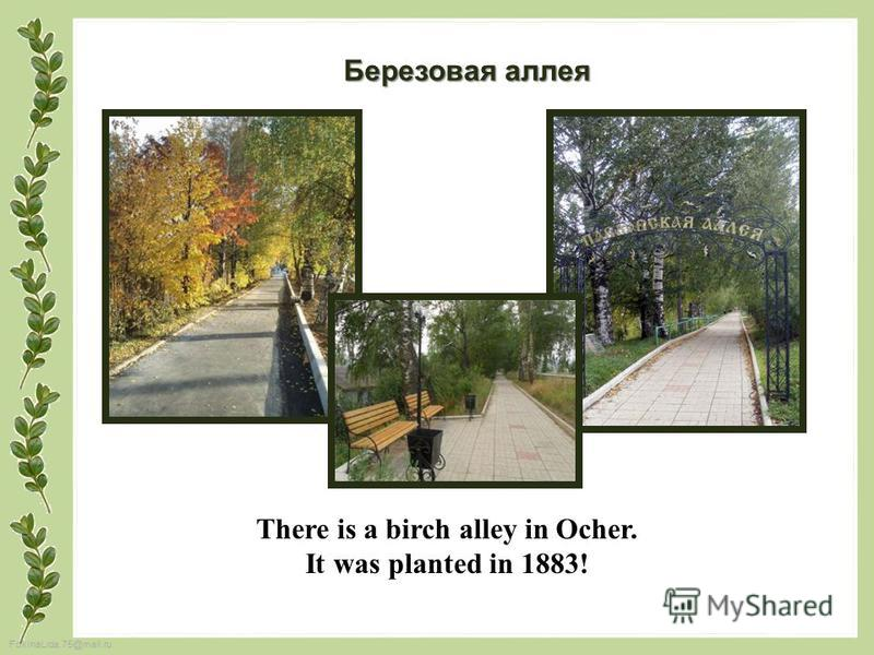 FokinaLida.75@mail.ru There is a birch alley in Ocher. It was planted in 1883! Березовая аллея