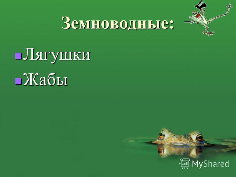 Земноводные: Лягушки Лягушки Жабы Жабы